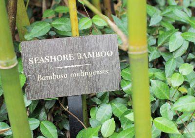 Seashore Bamboo